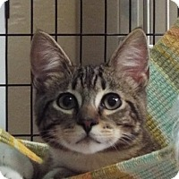 Adopt A Pet :: Taz - Grants Pass, OR