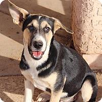 Adopt A Pet :: Dex - Phoenix, AZ