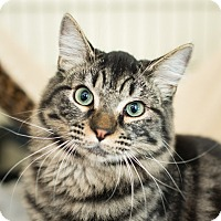 Adopt A Pet :: Boo Boo - Los Angeles, CA
