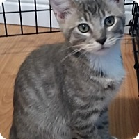Adopt A Pet :: Everett - Oakland Park, FL