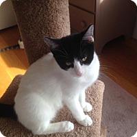 Adopt A Pet :: Itsy - Salem, MA