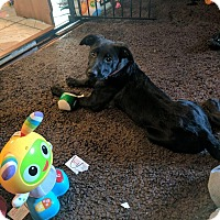Adopt A Pet :: Louise - Fairview Heights, IL