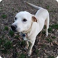 Adopt A Pet :: Austin - Shelburne, VT