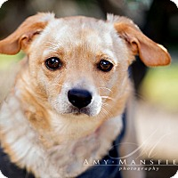 Adopt A Pet :: Summer - Vista, CA