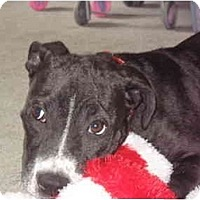 Adopt A Pet :: Kira - Reisterstown, MD