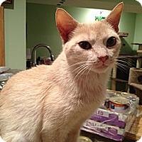 Adopt A Pet :: Faye - East Hanover, NJ