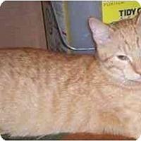 Adopt A Pet :: Sunburst - St. Louis, MO