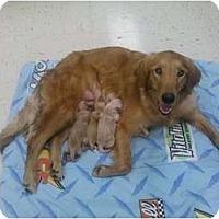 Adopt A Pet :: Xena - Murfreesboro, TN