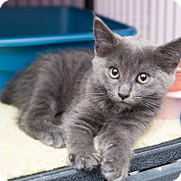 Adopt A Pet :: Plumbia - Shelton, WA