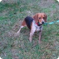 Adopt A Pet :: Merida - Dumfries, VA