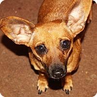 Adopt A Pet :: Brooke - Wilmington, DE