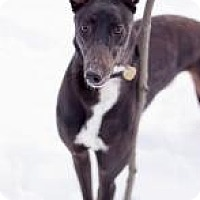 Adopt A Pet :: E's Lola Bunny - Gerrardstown, WV
