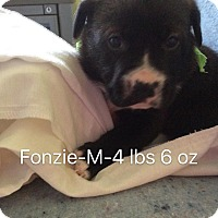 Adopt A Pet :: Fonzie - Buffalo, NY