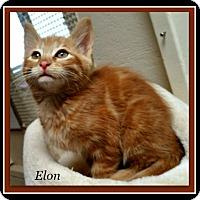 Adopt A Pet :: Elon - Tombstone, AZ