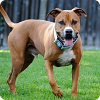Adopt A Pet :: Barley - Fargo, ND
