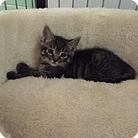 Adopt A Pet :: Emma - Monroe, NJ