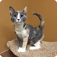 Adopt A Pet :: Willow - Philadelphia, PA