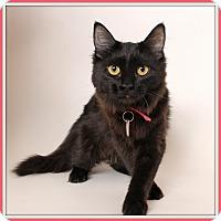 Adopt A Pet :: Cherish - Glendale, AZ