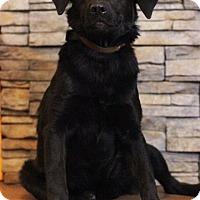 Adopt A Pet :: Elsie - Waldorf, MD