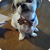 Adopt A Pet :: Percy - Overland Park, KS