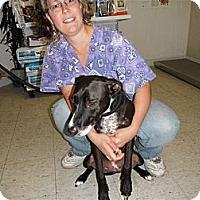 Adopt A Pet :: Missy - Des Plaines, IL