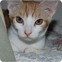 Adopt A Pet :: Sparkles - Scottsdale, AZ