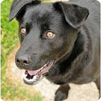Adopt A Pet :: Shadow - Chesapeake, VA