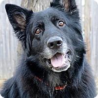 Adopt A Pet :: Anton - Wayland, MA