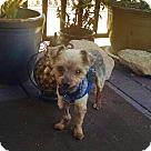 Adopt A Pet :: Herman