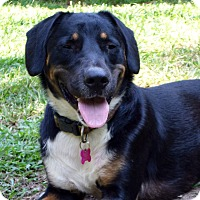 Adopt A Pet :: Vonnie - Wakefield, RI