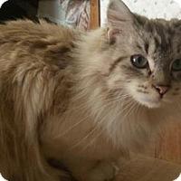 Adopt A Pet :: Norah - Ennis, TX