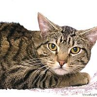 Adopt A Pet :: Spanky - Westchester, CA