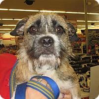 Adopt A Pet :: Eric - Rocky Mount, NC