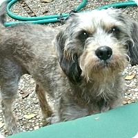 Adopt A Pet :: Poochie-ADOPTION PENDING - Boulder, CO