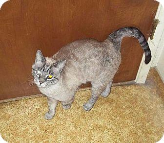 Modesto Cat Adoption