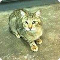 Adopt A Pet :: Buzz - Spring, TX