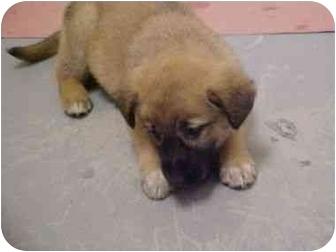 Dog Rescue Spokane Wa