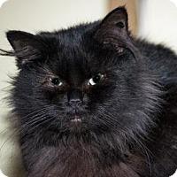 Adopt A Pet :: Calantha - Grand Ledge, MI