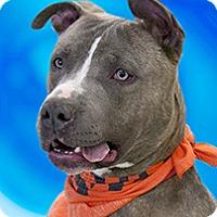 Adopt A Pet :: Jax - Cincinnati, OH