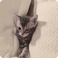 Adopt A Pet :: Woody - New York, NY