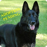 Adopt A Pet :: SHADOH - Winnipeg, MB