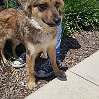 German Shepherd Dog Mix Dog for adoption in Fresno, California - Penny