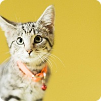Adopt A Pet :: Litten - Cincinnati, OH