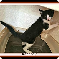 Adopt A Pet :: Kennedy - Tombstone, AZ