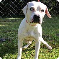 Adopt A Pet :: Icest - Savannah, GA