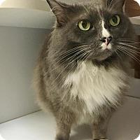 Adopt A Pet :: Medusa - Shaftsbury, VT