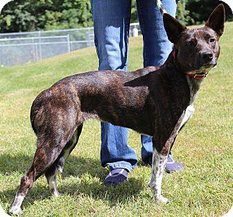 Terrier (Unknown Type, Medium) Mix Dog for adoption in Portage, Wisconsin - Sophie