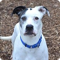 Adopt A Pet :: Vedder - Delaware, OH