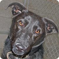 Adopt A Pet :: Jada - Ruidoso, NM