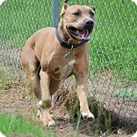 Adopt A Pet :: Zeus - Chambersburg, PA